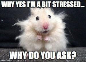 Bit stressed finals